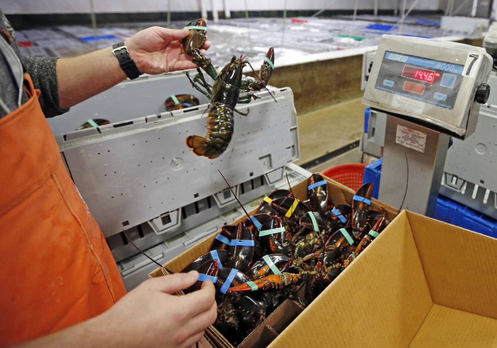Live lobsters are packed and weighed for overseas shipment at the Maine Lobster Outlet in York. A trade deal between Canada and the European Union, which gets rid of tariffs on Canadian lobster exports, could have a negative affect for the U.S. at Christmastime.