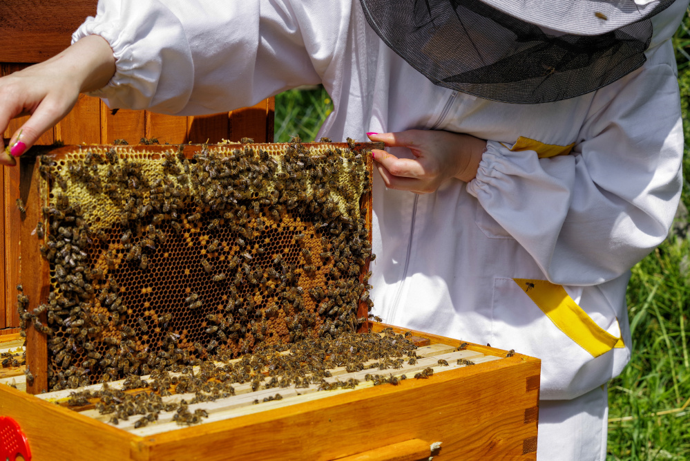 The U.S. bee industry lost 44 percent of its bees from 2015 to 2016 and 40 percent the year before, and a warm winter in 2017 is not helping. Jaroslav Moravcik/Dreamstime/TNS