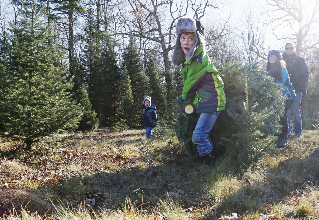 Jaidon Petersen, 6, leads the way as he and his sister, Cadence McGrady, 9, haul out their tree of choice at Holmes Tree Farm in Kennebunk last Sunday. The cut-your-own tree season began last week at Maine tree farms, from Wells to Hiram to Calais and dozens  of places in between, as many families embarked on their annual post-Thanksgiving, pre-Christmas tradition.