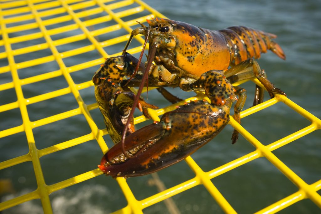 The Maine Lobster Marketing Collaborative's $2.2 million annual budget is funded by surcharges on state-issued lobster licenses.