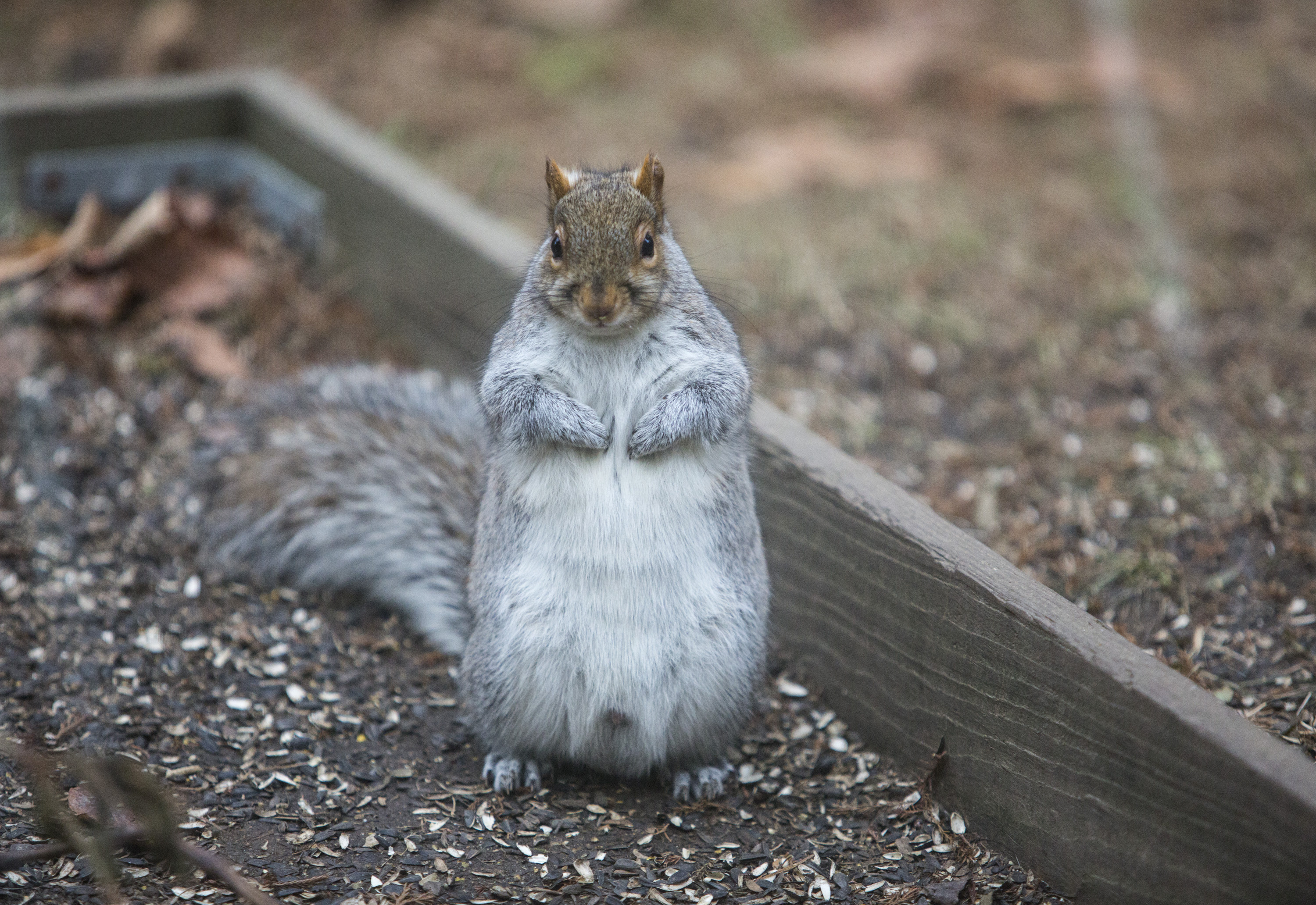 How to Attract Squirrels pictures