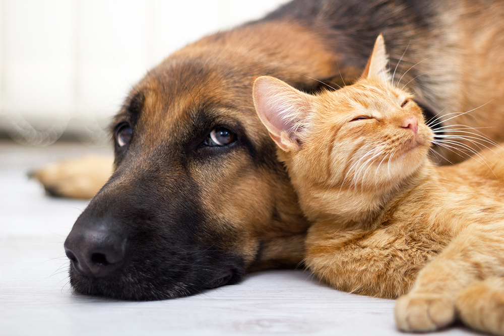 Which Animal Is Smarter Cat Or Dog