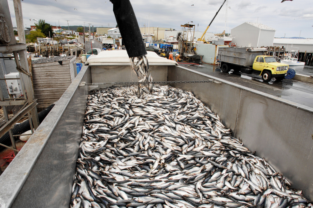 A fishing boat unloads its catch of herring. The National Marine Fisheries Service has spent more than a decade working on changes in how it manages New England ocean habitat.