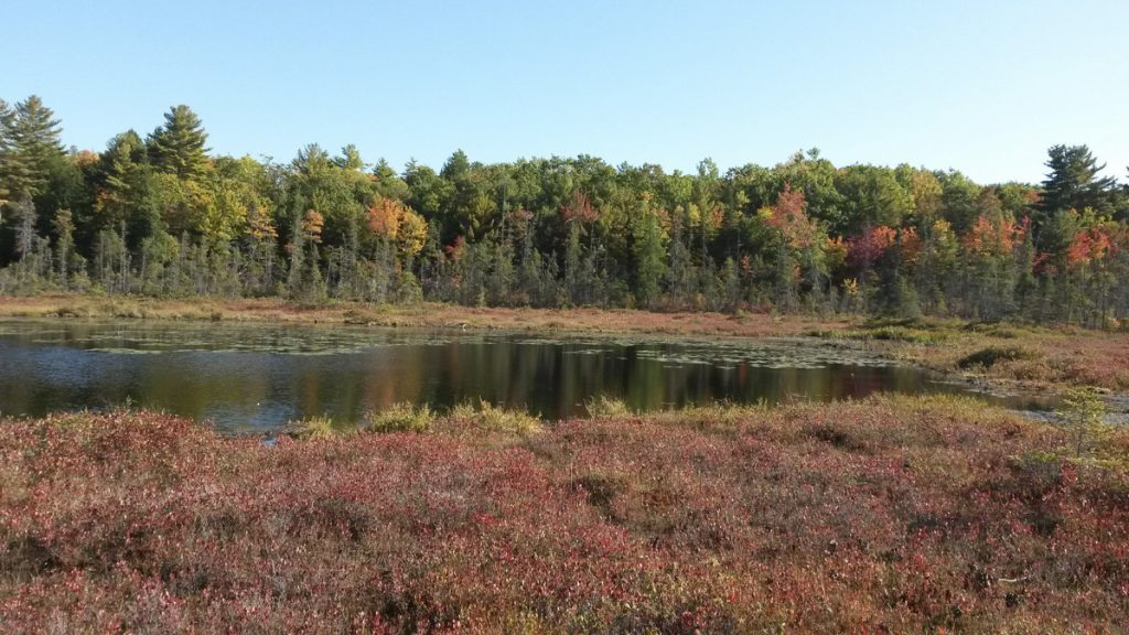 Freshwater bogs like the one pictured are important parts of the nearly 1,000 acres of land recently conserved by the Midcoast Conservancy. The effort is the largest in the organization's history. (Photo courtesy of Midcoast Conservancy)