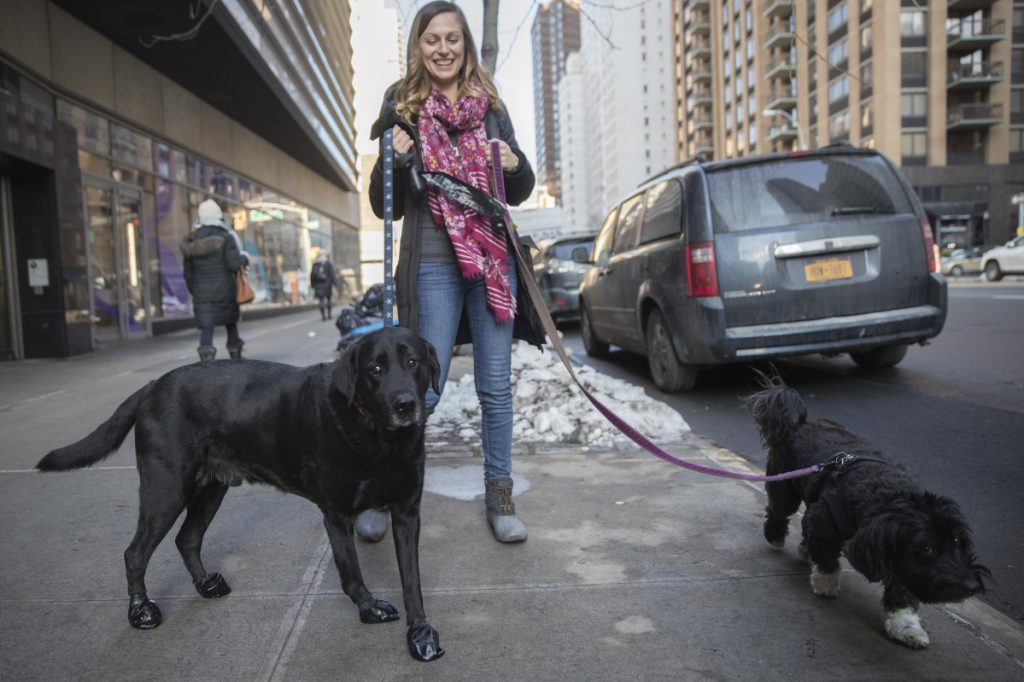 Tanya Lim, owner of Play Pals NYC, walks Cannon, left, and Gigi, on New York's Upper West Side on Tuesday. When the temperature plunged after Christmas, so did revenue at Play Pals NYC. Many of Lim's clients cancelled because they decided to work from home.