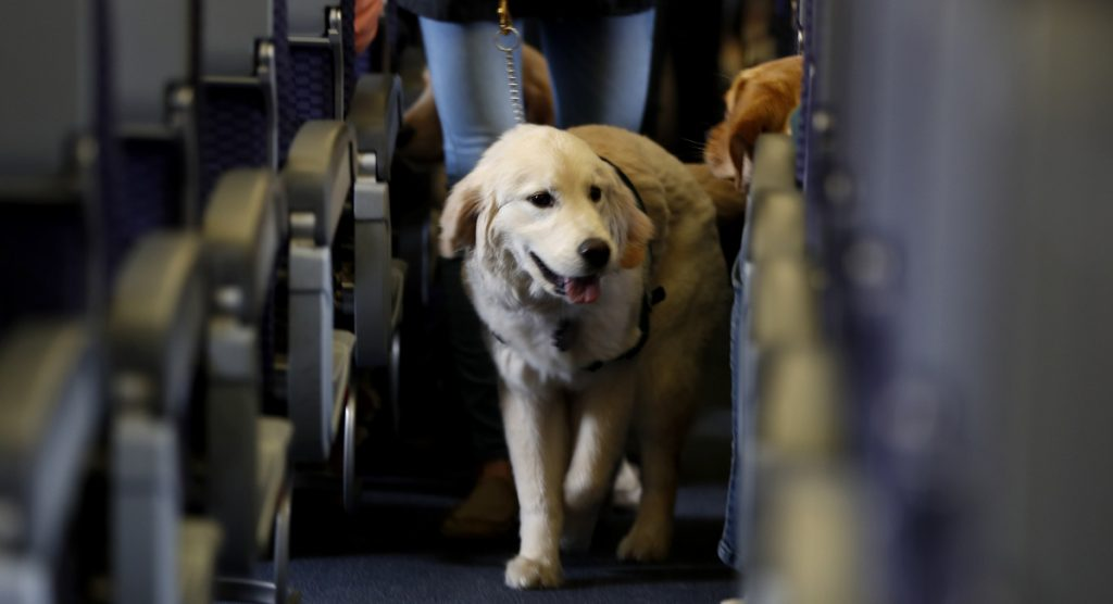 A service dog strolls through the aisle of a plane at Newark Liberty International Airport in 2017. Delta's crackdown will benefit travelers with real conditions that warrant accommodation of support animals.