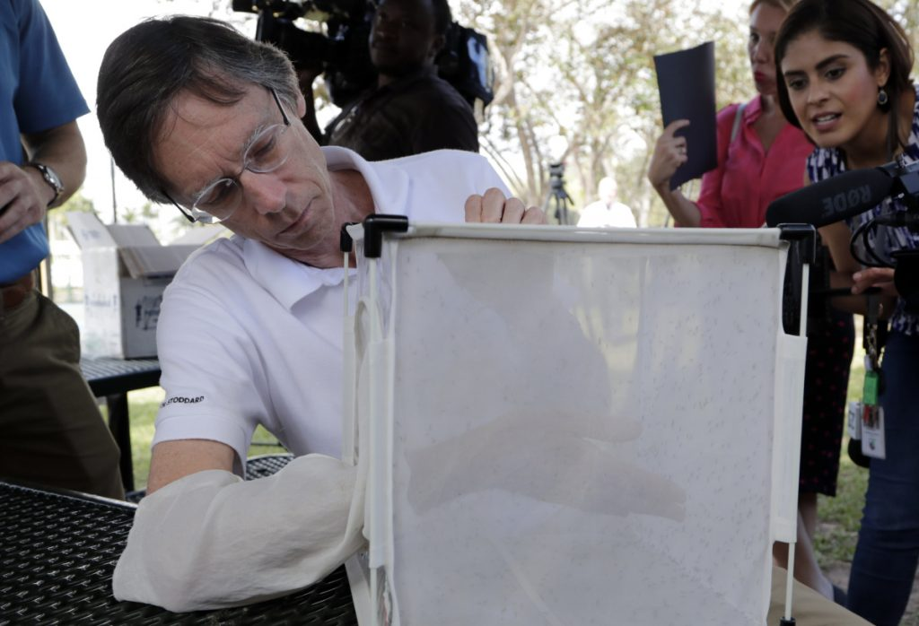 Bill Petrie, Director of Miami-Dade County Mosquito Control, inspects a box containing infected male mosquitoes, Thursday, Feb. 8, 2018, in South Miami, Fla. Thousands of bacteria-infected mosquitoes are being released, left,  near Miami to test a new way to suppress insect populations that carry Zika and other viruses. (AP Photo