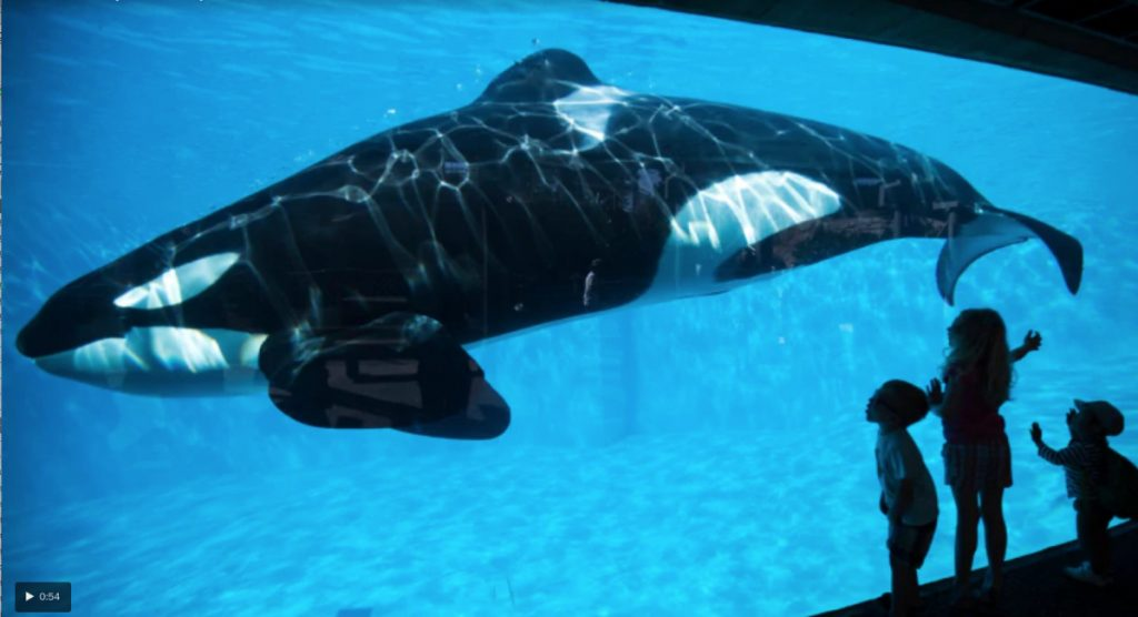 Wikie, a 14-year-old killer whale, has been recorded by researchers making sounds similar to human words.