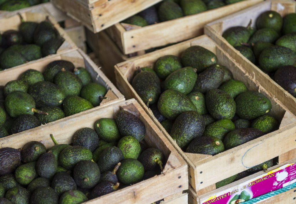 High avocado prices have fueled deforestation in Michoacan, where farmers cut down pines to clear the way for more avocado trees.