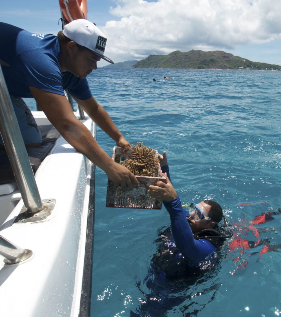 A box of nursery-grown coral is handed to a diver off the coast of Praslin Tuesday. The island nation of the Seychelles is pioneering a marine conservation plan as part of a debt swap deal with creditors.