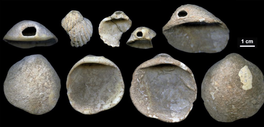 Perforated shells found in sediment near Cartagena, Spain. The artifacts date to between 115,000 and 120,000 years ago.
