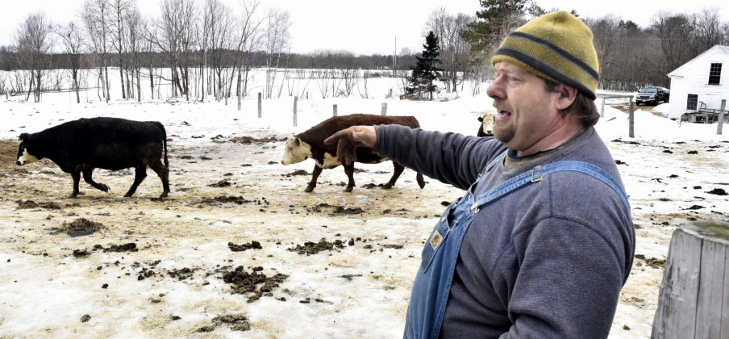Clayton Tibbetts points to a section of fenced pasture on Thursday at his farm in Madison, where he discovered one of his Angus beef cows dead last week. He was told afterward that the 4-year-old pregnant cow named Fluffy had been shot and killed. He suspects the killer used a nearby snowmobile trail on his property and has closed the trail to snowmobiling.