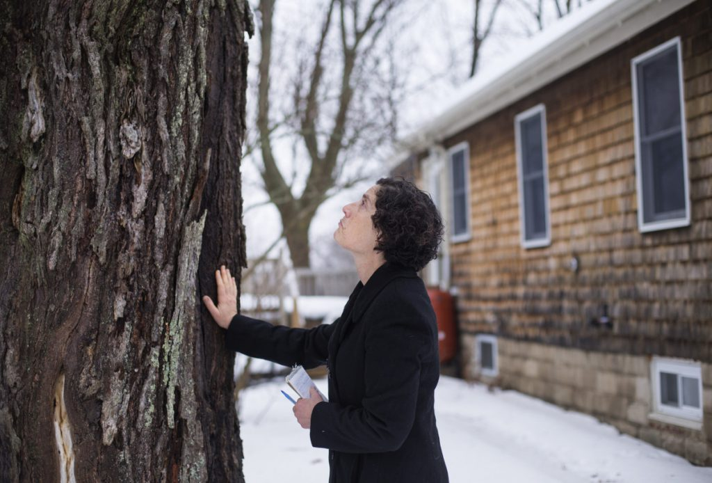 "Source editor Peggy Grodinsky prepares to part with the red maple tree in her Portland yard before it was cut down Jan. 12. A reader says Grodinsky's touching story made her realize a need to refocus on things ""found in the interstices"" of everyday concerns."