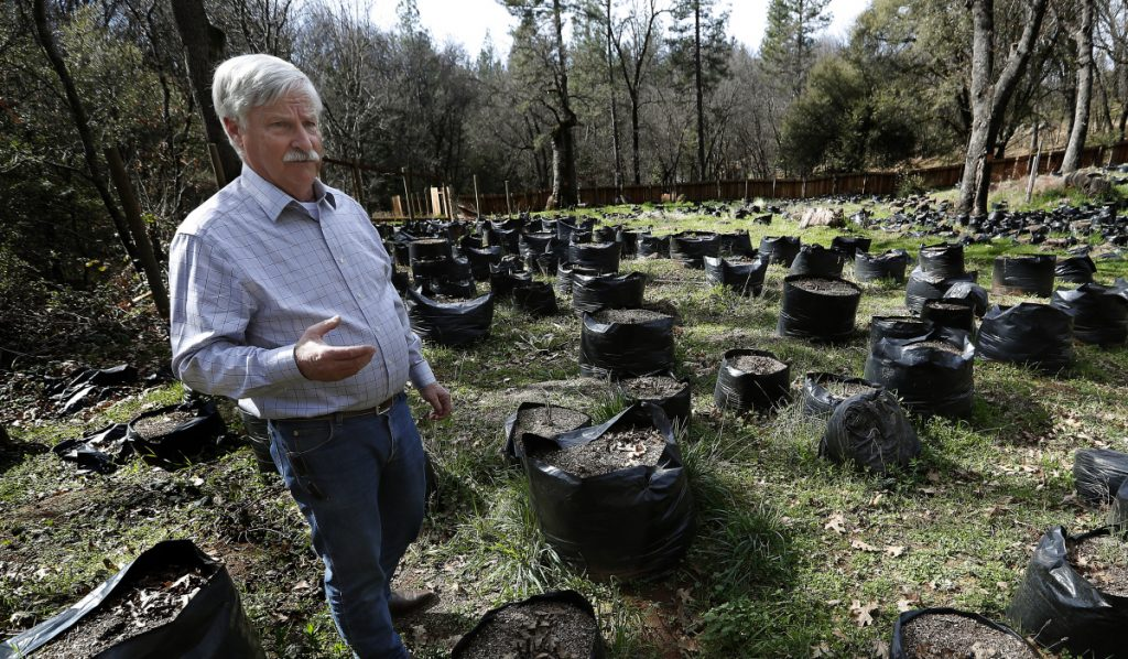 Calaveras County Supervisor Dennis Mills tours an illegal marijuana grow site in a remote area of the Sierra Foothills. The board voted January to ban all cultivation.
