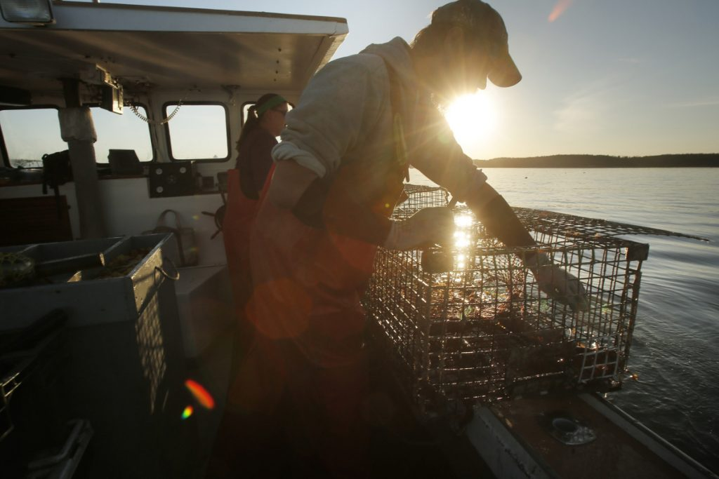 Cory McDonald removes a bait bag from a lobster trap while fishing off the coast of Stonington in 2015. Maine is about to get a new lobster processing facility that will also look for ways to add value to the product.  (Staff photo by Gregory Rec)
