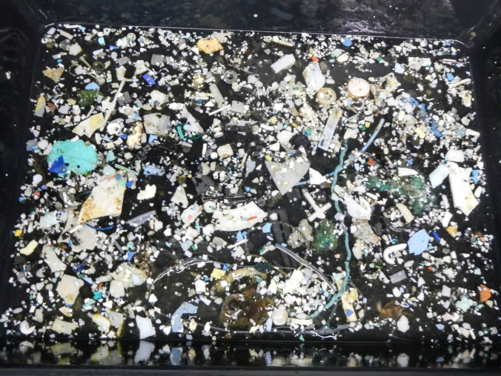 A sampling of plastic from the Great Pacific Garbage Patch.