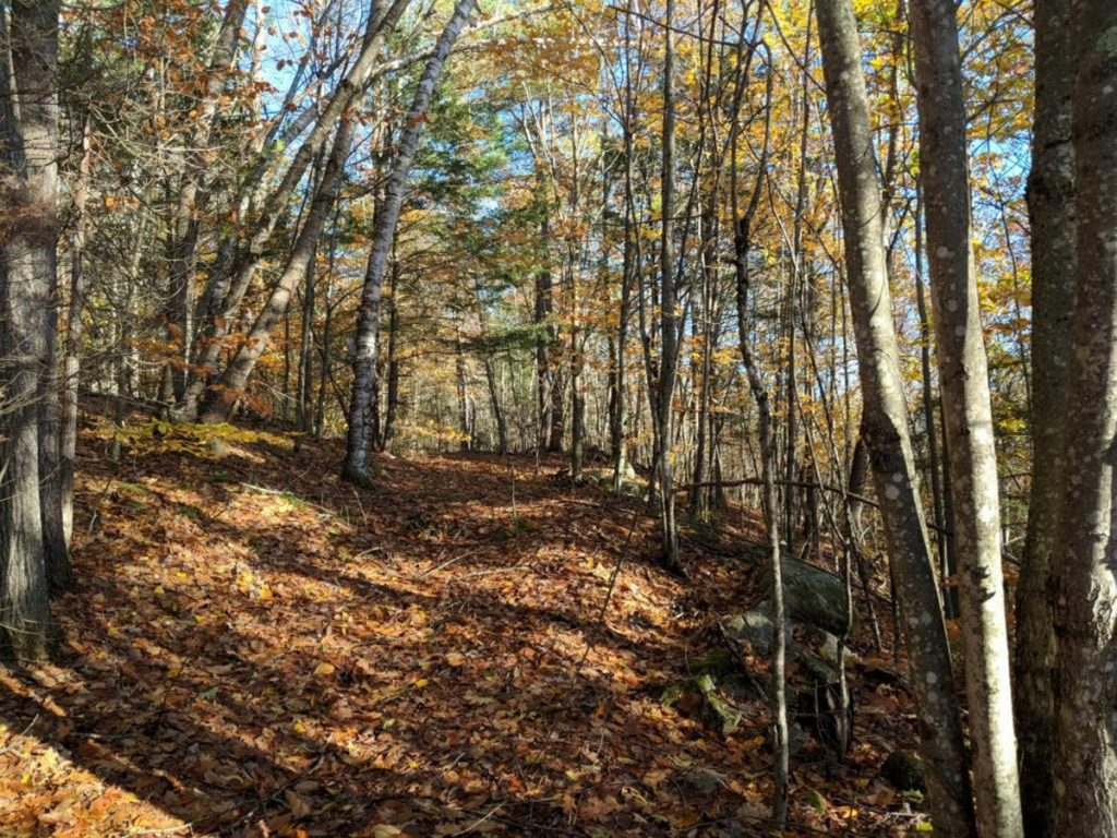 George and Linda Smith recently donated a 125-acre family woodlot in Mount Vernon to the Kennebec Land Trust. It is called the Ezra Smith Wildlife Conservation Area, after George's father.