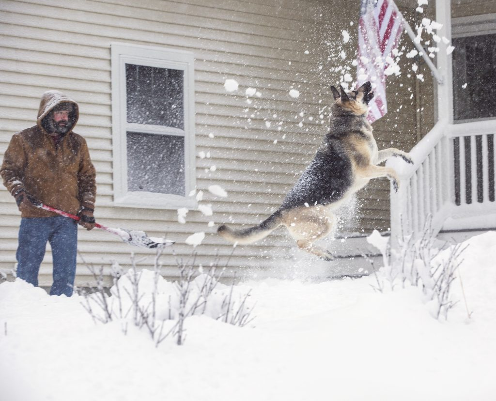 Otto leaps after a snow while his owner David Chiarello of Scarborough shovels his walkway on Thursday morning.