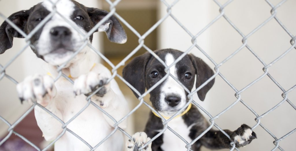These pups were brought to a Maine shelter from Georgia. Our success with adoption and spay-neuter programs means there aren't enough dogs here to fill demand.