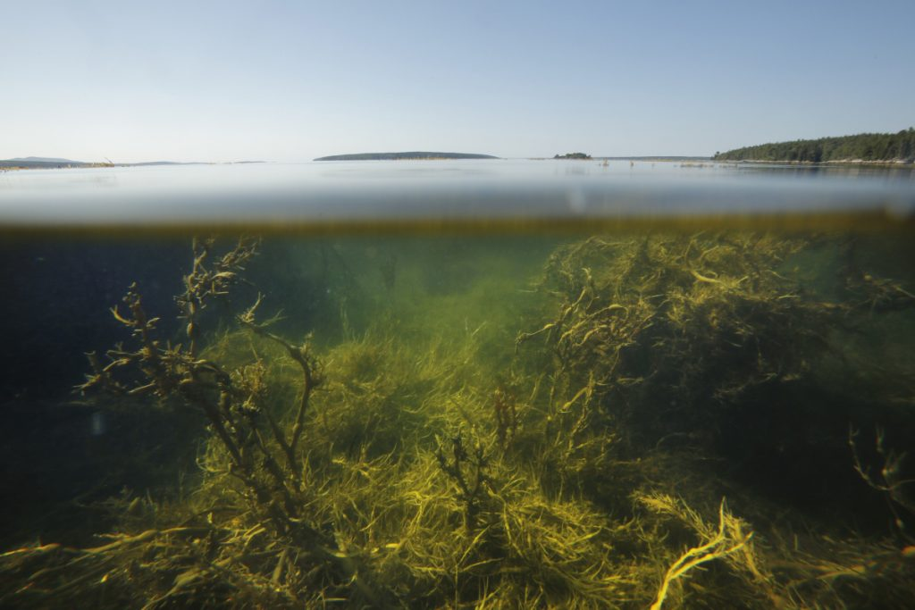 The Gulf of Maine, as seen in 2015, has been filling with unusually warm water in recent months.
