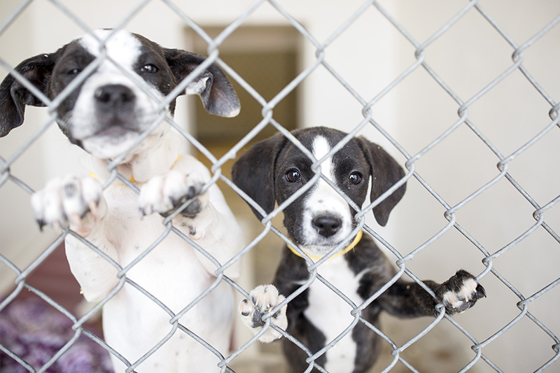 For Shelter Dogs From Away Doors Wide Open In Maine Portland