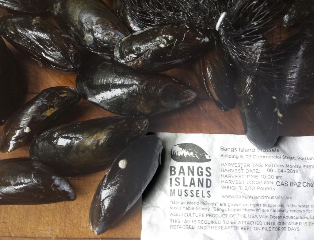 Bangs Island Mussels ready for the pot.