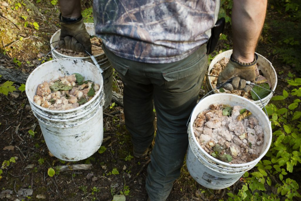 A hunting guide carries buckets of bear bait, mostly doughnuts, into a baiting site in 2015. A reader says baiting should be ended because it leads to bear overpopulation.