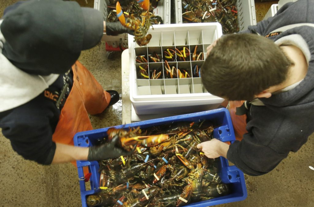 Live Maine lobsters could get a lot more expensive in China than the crustaceans caught in Canada if threatened tariffs are imposed next month in an escalating trade war.
