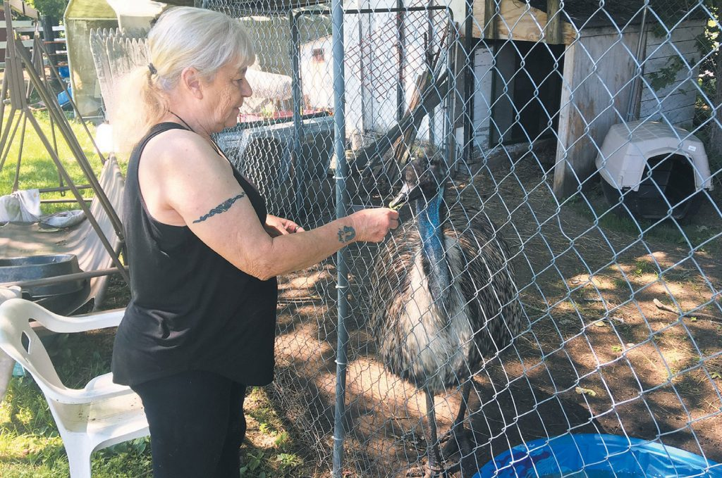 Janet Tuttle feeds Ralphie, the emu that has been in her care for nine years. Tuttle is trying to relocate the bird to a permanent home in Georgia.