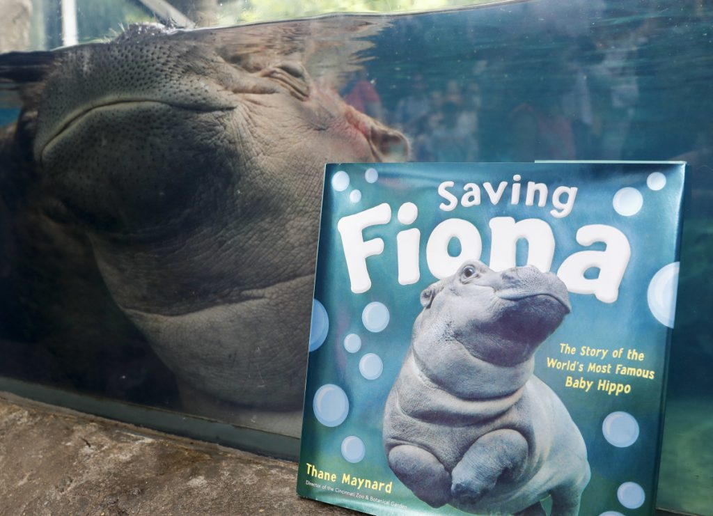 "Fiona, a baby Nile Hippopotamus, sleeps in her enclosure beside a copy of ""Saving Fiona"" at the Cincinnati Zoo."