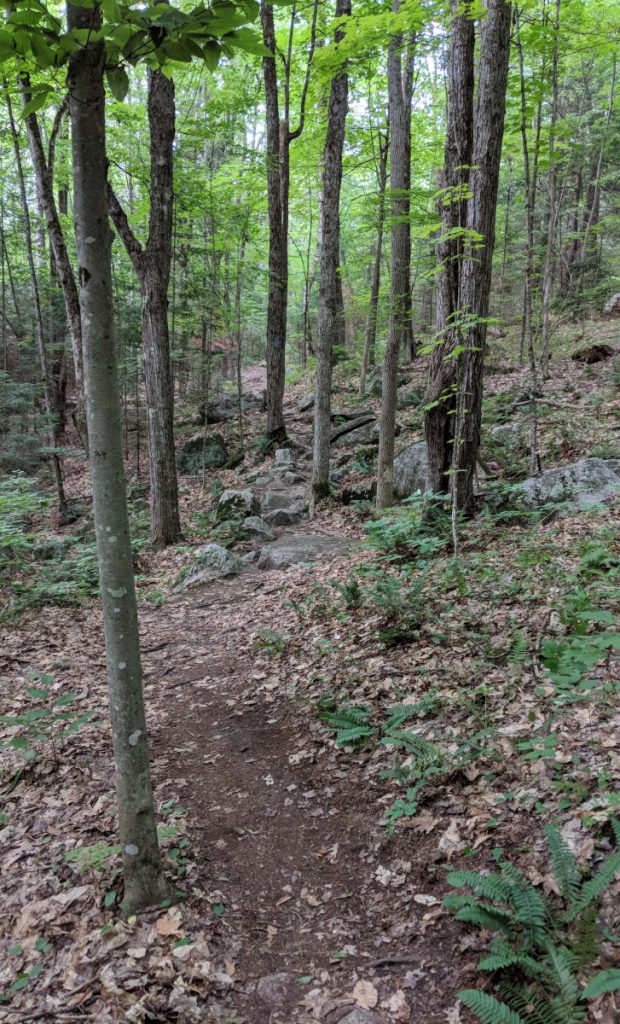 Homestead Trail, which travels over a rugged, rooty up-and-down path, is one way to reach the picnic meadow.