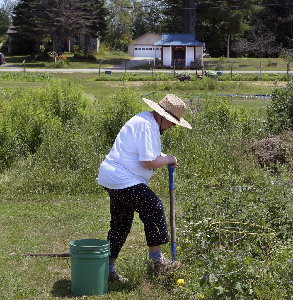 "Janet Cowperthwaite weeds in her plot Wednesday at the Annabessacook Farm in Winthrop. Owners Jop Blom and Craig Hickman donate space for neighbors to garden on the farm. ""He works so hard,"" Cowperthwaite said of Hickman, who was injured in a fire Tuesday."