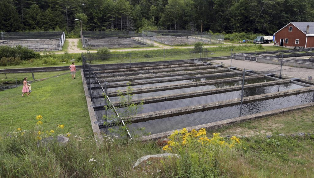 """Visitors walk the grounds of the Powder Mill Fish Hatchery in New Durham, N.H. """"This fish hatchery has polluted the rest of the river and all of the town's ponds to the point where we can no longer recreate in them,"""" said retired toxicologist Fred Quimby."""