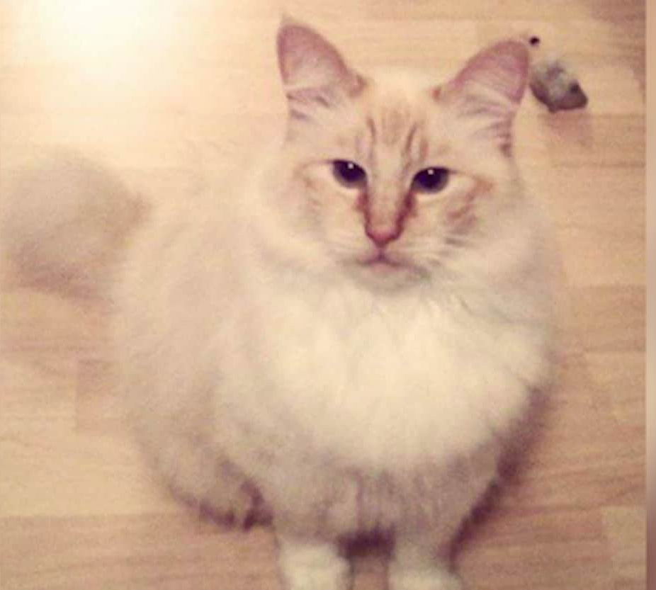 Olly was one of 7 cats in Washington state found killed and mutilated.