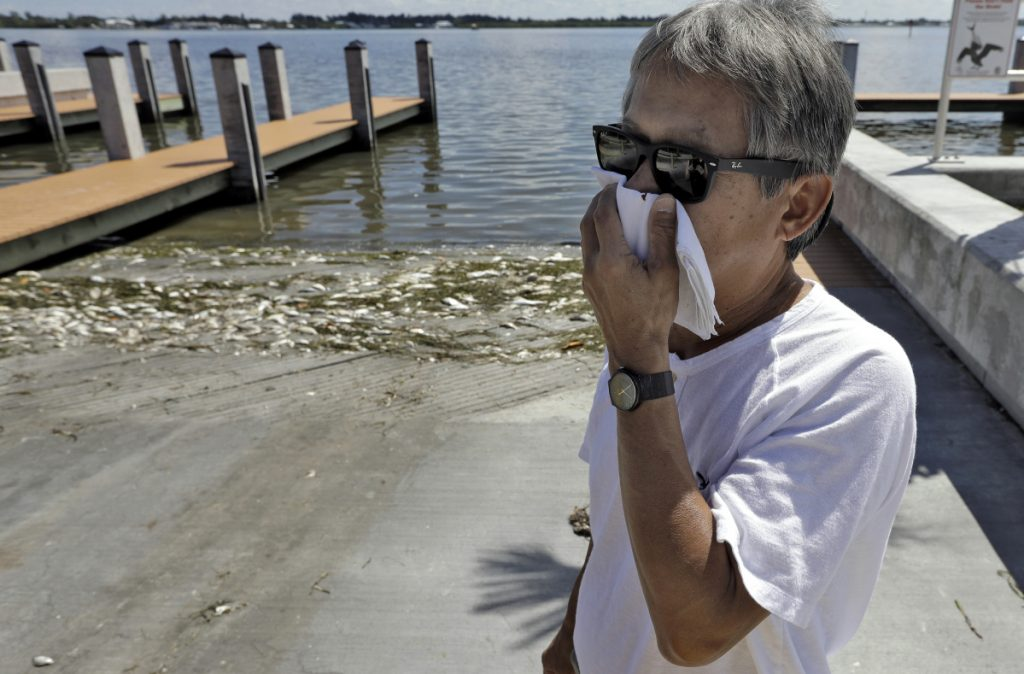 Alex Kuizon covers his face as he stands near dead fish at a boat ramp in Bradenton Beach, Fla. About 135 miles north, beach communities along the Gulf Coast have been plagued with red tide.
