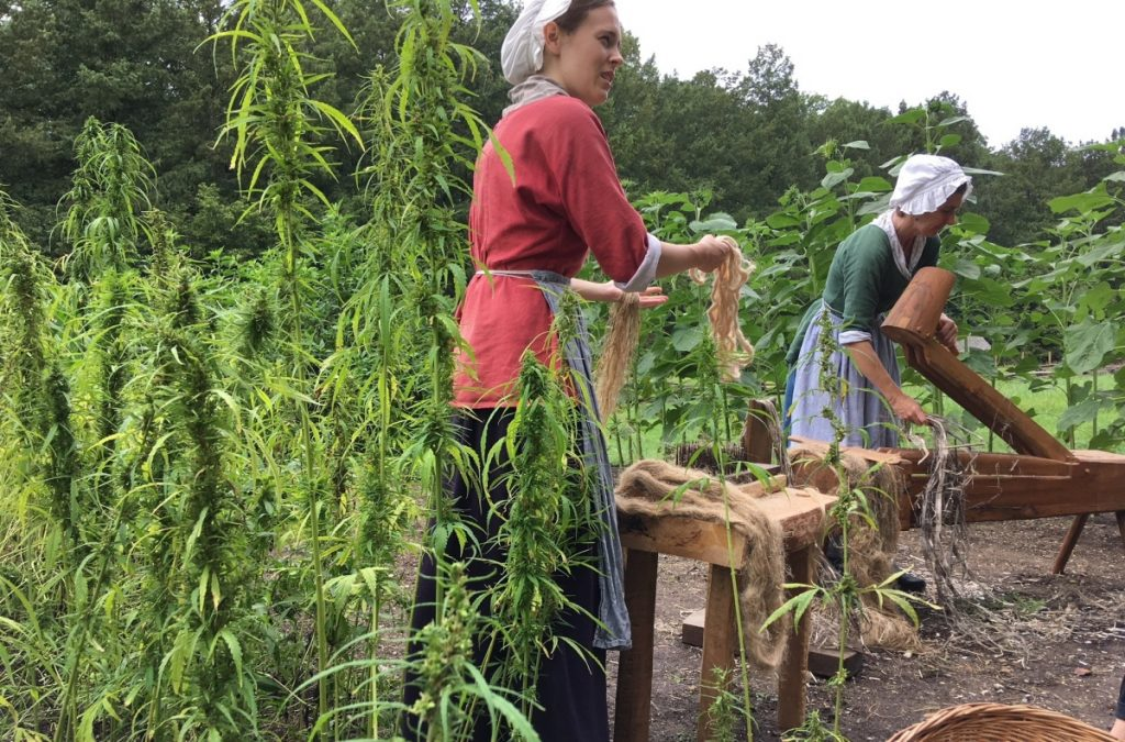 Employees at George Washington's Mount Vernon estate in Virginia harvest the first hemp crop grown there in centuries. Megan Romney, left, and Deb Colburn are among a group who planted it in May to highlight Washington's time as a farmer. People of his era wouldn't have used cannabis to get high, but he did view the plant as a cash crop.