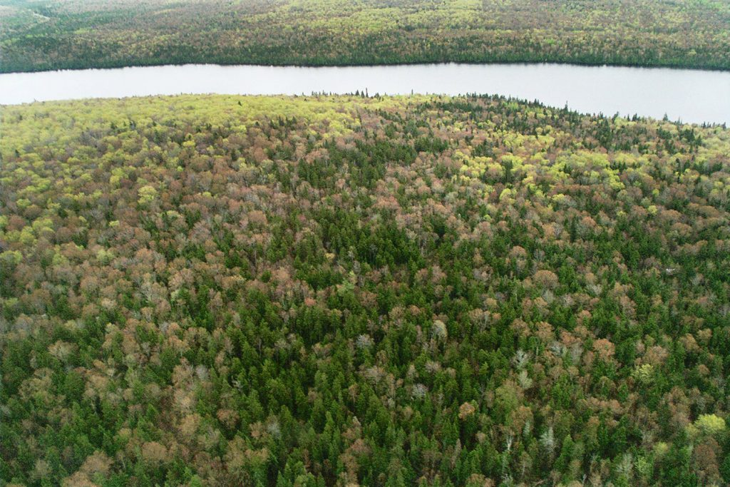 This aerial photo of the upper St. John River Valley shows the lush forest growth that is a valuable tool in fighting climate change.