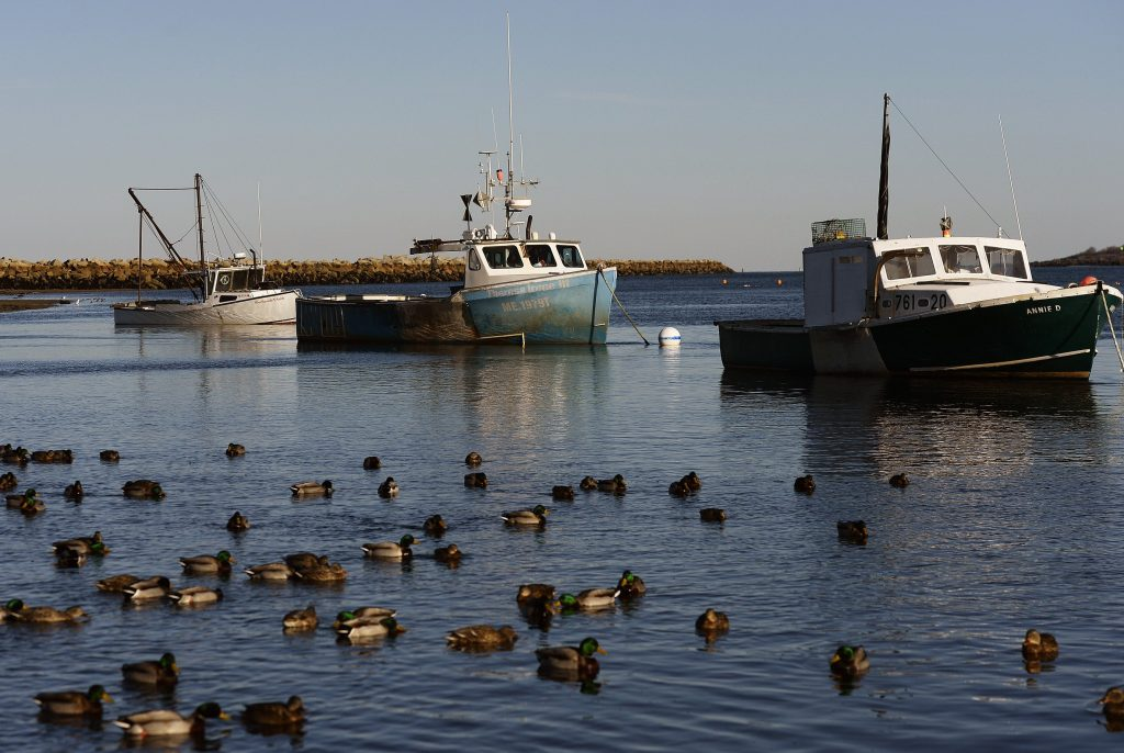Lobster boats are tied up at the mouth of the Saco River in Camp Ellis in February. A new federal report forecasts declines of species that support some of the most valuable and iconic fisheries in the Northeast, including cod, sea scallops, and lobster.