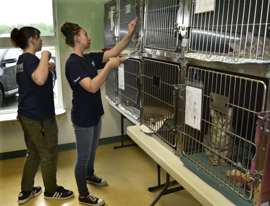 Humane Society Waterville Area employees Cassidy Morse, left, and Susan Robbins feed the cats Wednesday at the financially strapped Waterville facility.