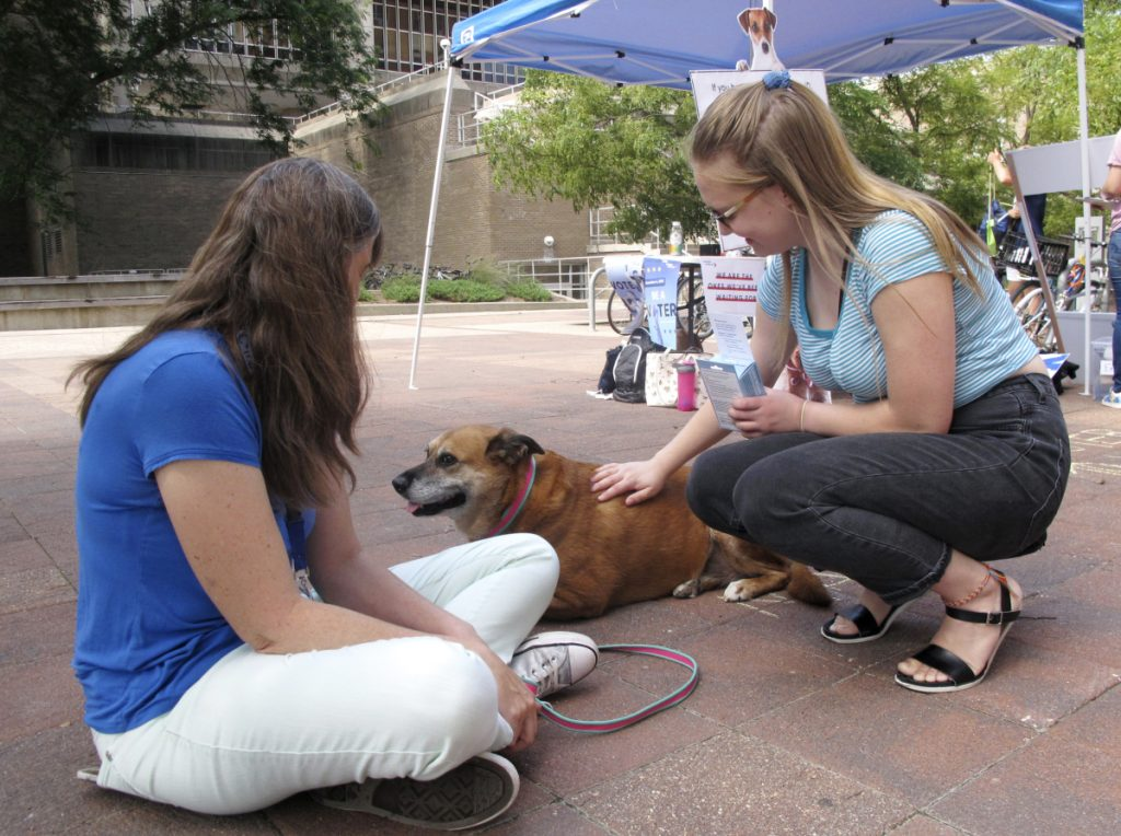 "University of Wisconsin junior Grace Austin, right, visits Maggie, a therapy dog, at a voter registration event in Madison, Wis. Austin wound up registering to vote. ""If we all vote, we can make a change,"" she said."