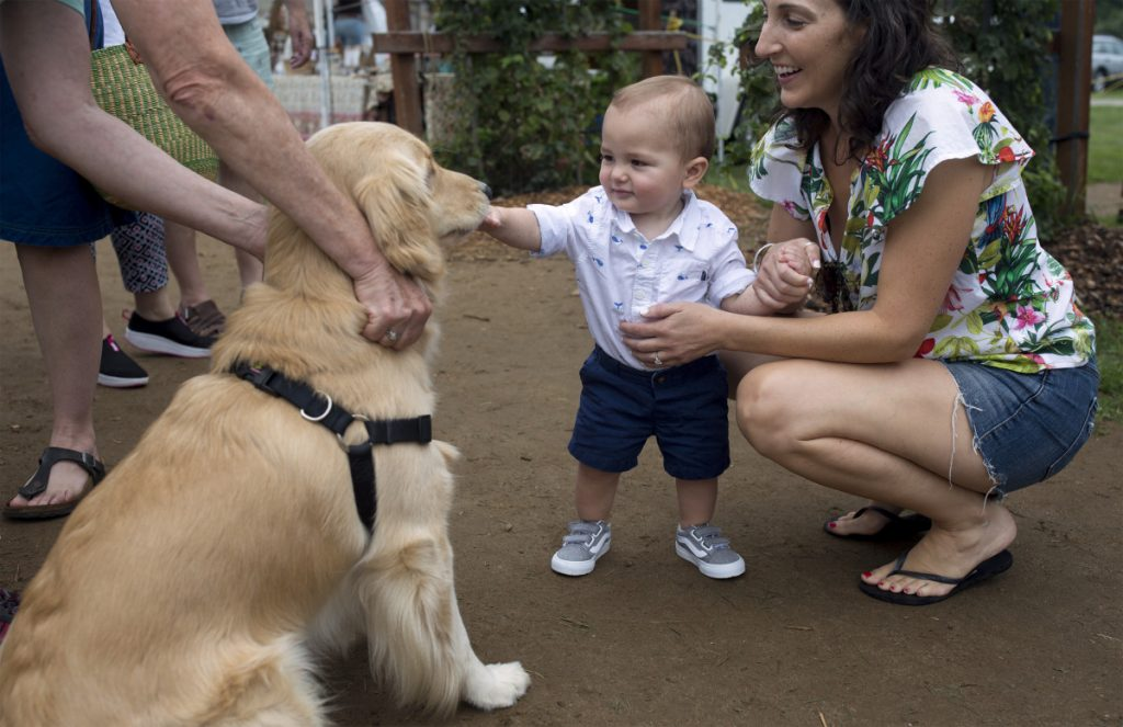 Ashley Tomlinson of Norwalk, Conn., holds her son Blake, 1, as he pets a golden retriever named Callie at the Crystal Spring farmers market in Brunswick on Aug. 18. Crystal Spring is believed to be the first outdoor farmers market in Maine to enact a ban on dogs.