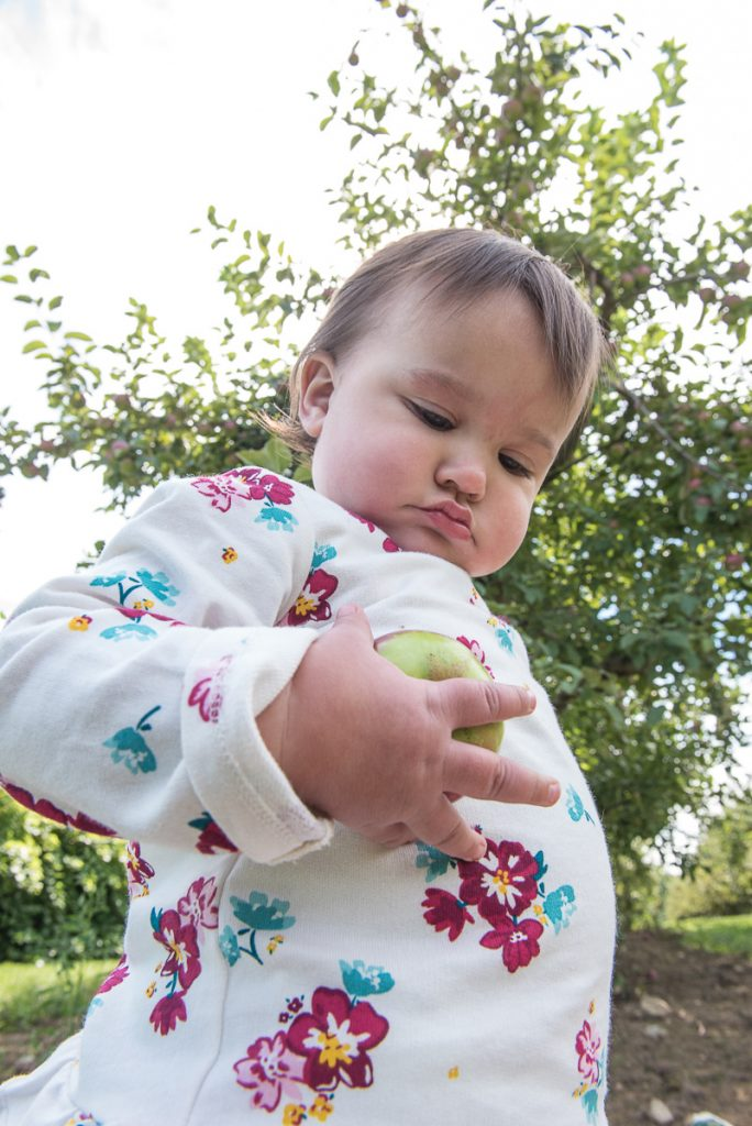 Jovie Salgado, 1, of  Rumford, inspects an apple at Boothby's Orchard & Farm on Maine Apple Sunday.