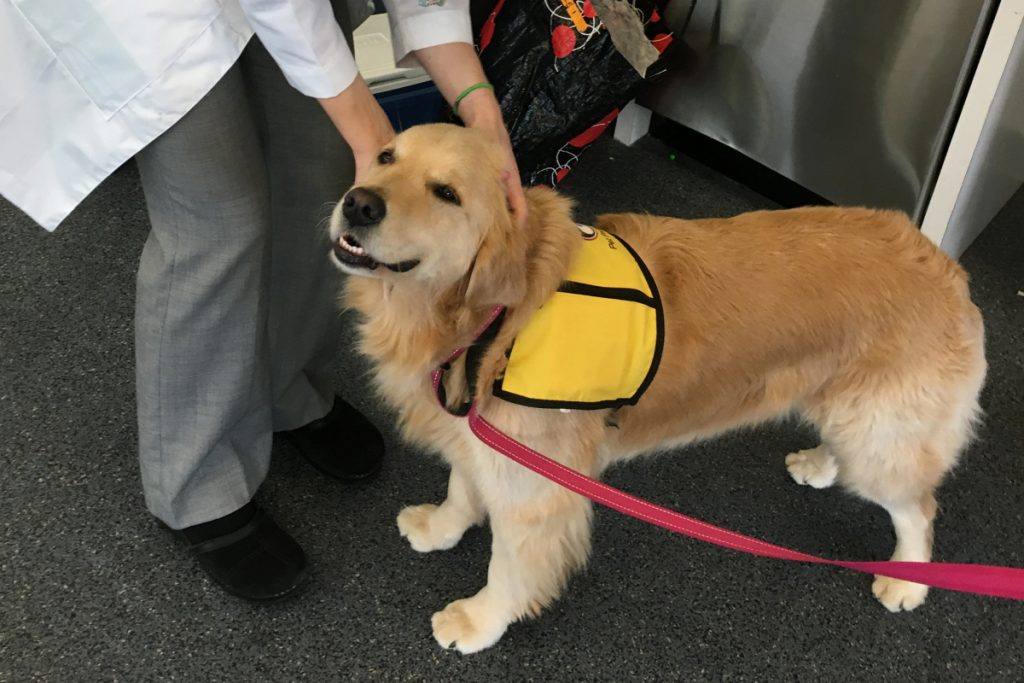 Winnie was one of four therapy dogs in the Johns Hopkins study. Research showed cancer patients who spent more time with the dogs has a 6 times greater chance of picking up the antibiotic-resistant bacteria.