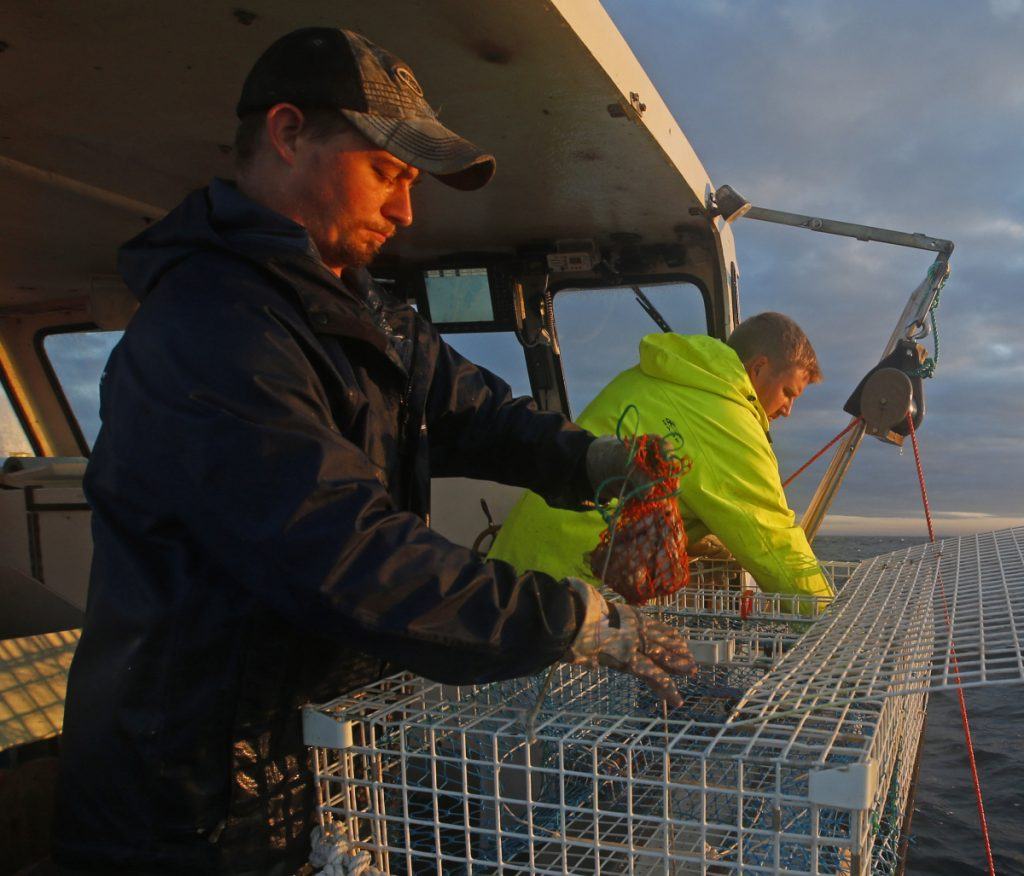 Sternman Brandon Demmons, left, places a bait bag containing herring into a lobster trap while fishing off Monhegan Island in 2014. The herring quote for 2019 has been cut by 78 million pounds.