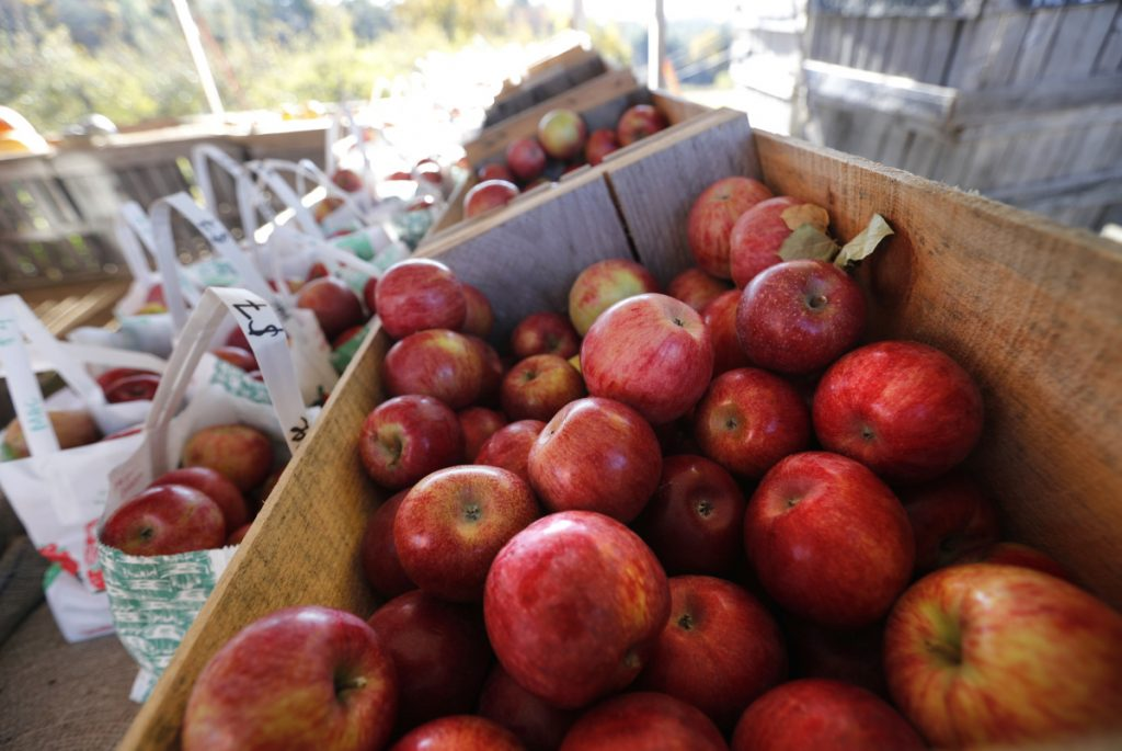 Apples are displayed for sale Friday at the Apple Acres orchard, in Hiram. A spokesman for the New England Apple Association says its prediction of a 10 percent increase in this season's harvest appears to have held up in Maine, which is one of the top two apple producers in the six-state region along with Massachusetts.