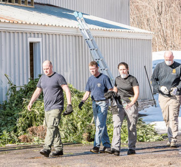 Federal drug agents confiscate marijuana plants in a warehouse behind a used car business in February during a raid that targeted 20 locations in Lewiston and Auburn.