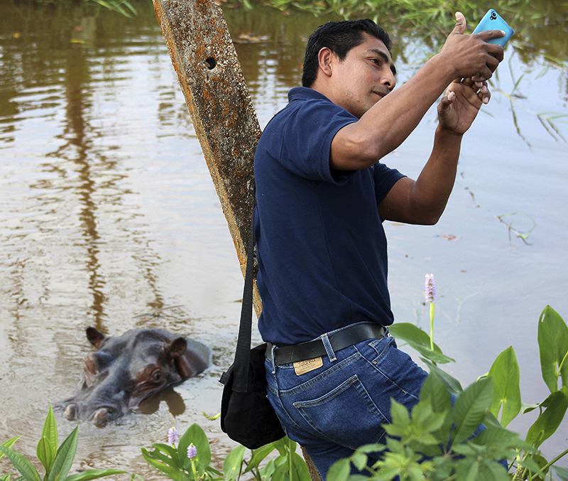 A man takes a selfie with a hippopotamus in Mexico (although the animal is not native to Mexico).