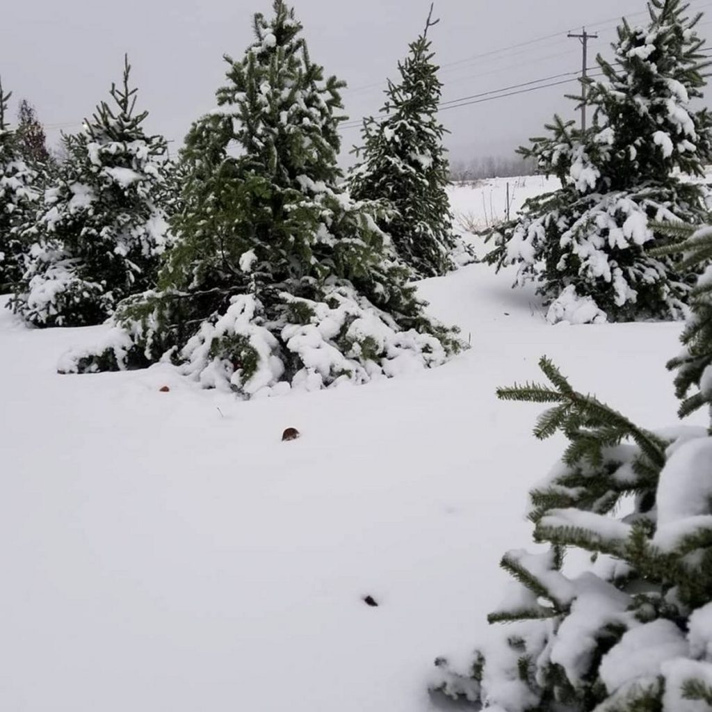 """Wallingford's Fruit House, which says it has lost a half-dozen Christmas trees to theft this year, addressed the tree thieves Wednesday on Facebook with this message: """"We have security cameras on the field and are adding more to get a better view of your license plate."""""""