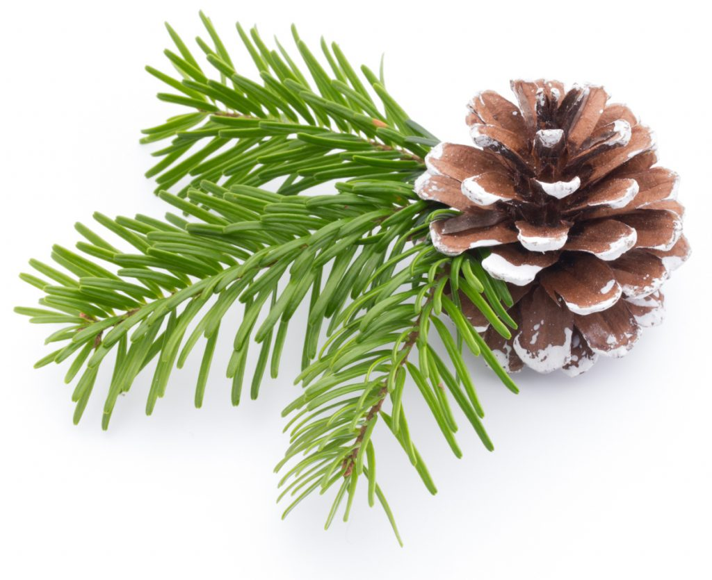 Cuttings from needled evergreens are good for wreaths.