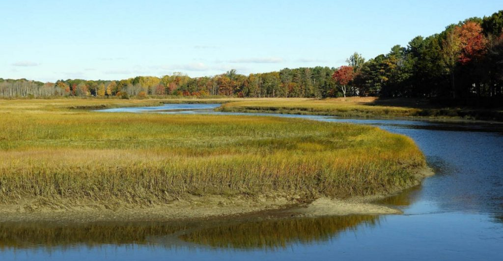Marsh grasses are thick along the upper portion of the Nonesuch River.